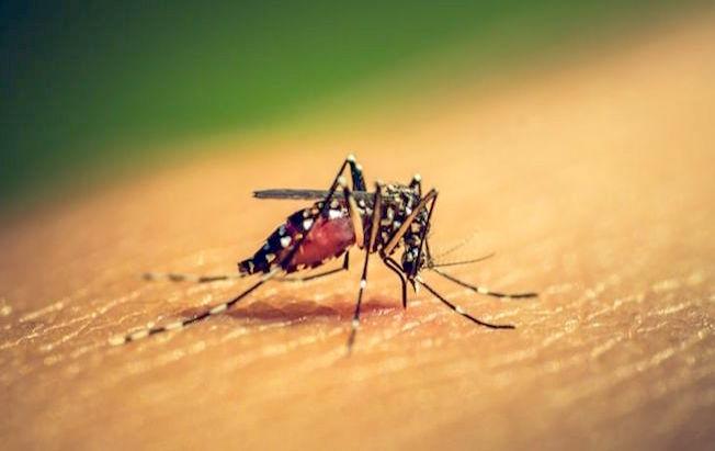 Disminuyeron los casos de dengue en Chiapas:SS