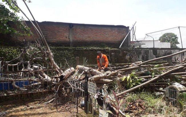 Rachas de viento dejan afectaciones enTapachula