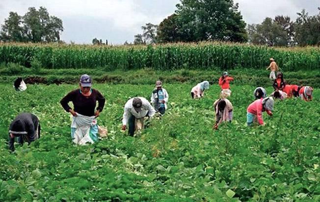 Unos 16 mil guatemaltecos podrían trabajar enChiapas