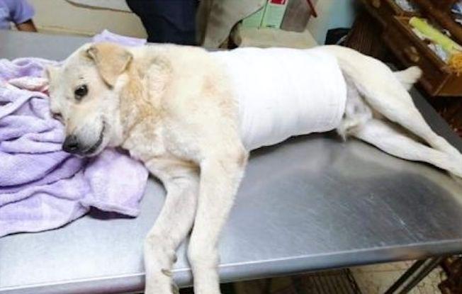 Hombre drogado acuchilló a perrito callejero enSCLC