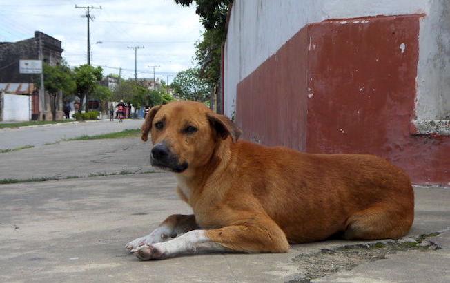 Ejidatarios planean matanza de perros enOcozocoautla